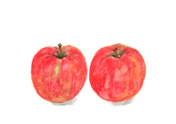 リンゴ,シナノゴールド,フルーツ,果物,,高塚由子,Yoshiko,Taaktsuka,水彩画,Watercolor,イラスト,素材,食材,食べ物