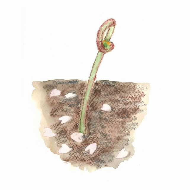 ワラビ, 蕨, 春, 高塚由子,Yoshiko,Taaktsuka,水彩画,イラスト,素材