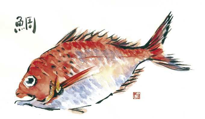 鯛,タイ,水彩画,イラスト,素材,食材