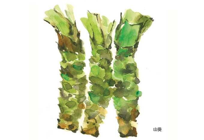 ワサビ,水彩画,イラスト,山葵,食材,素材