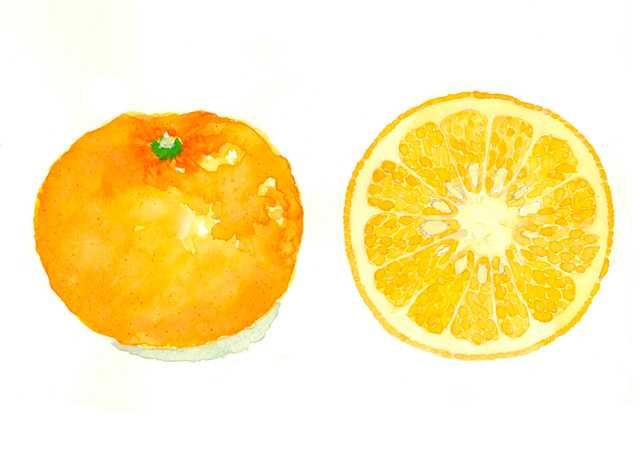 甘夏,フルーツ,柑橘,果物,水彩画,イラスト,素材,食材