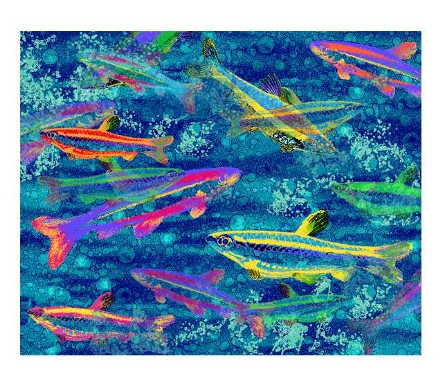 魚,海中,イラスト,ダイビング