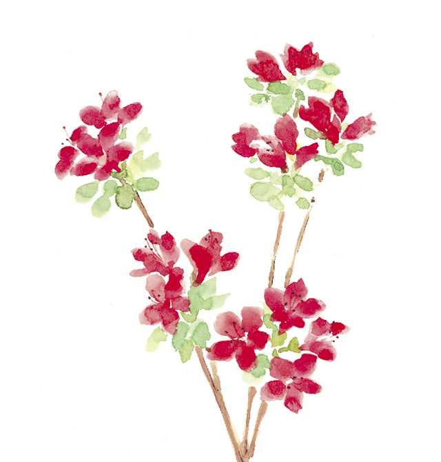 キリシマツツジ,花,植物,春,水彩画,イラスト