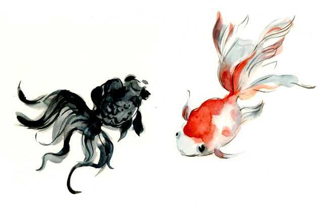 金魚,出目金,水彩画,魚,素材