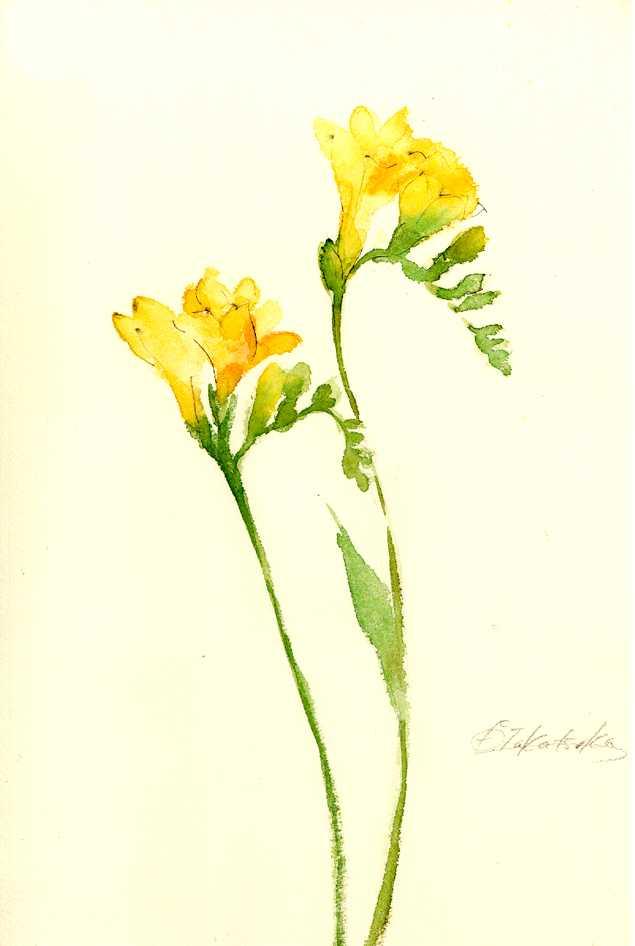フリージア,花,水彩,イラスト,植物,素材