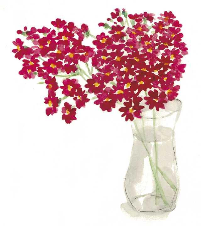 百日草,水彩画,イラスト,植物,花,素材
