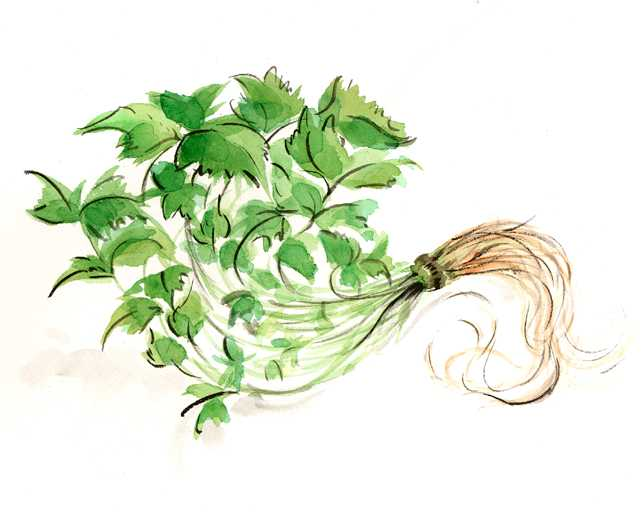 根みつば,旬,野菜,春,水彩画,イラスト,食材,素材