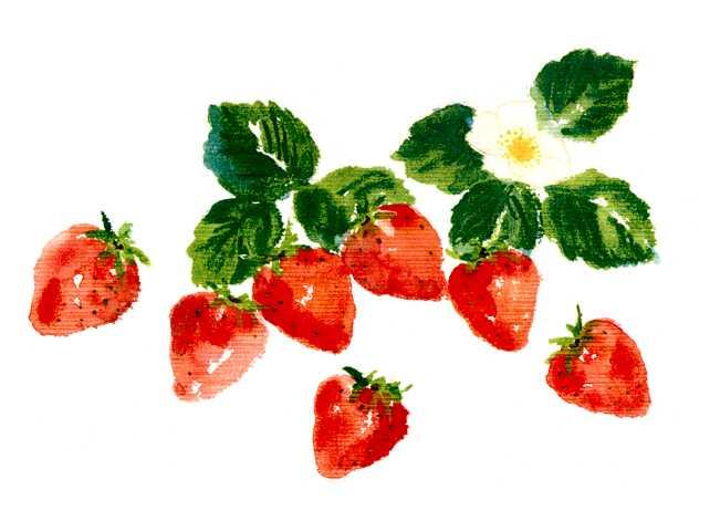 イチゴ,果物,フルーツ,水彩画,素材,食材
