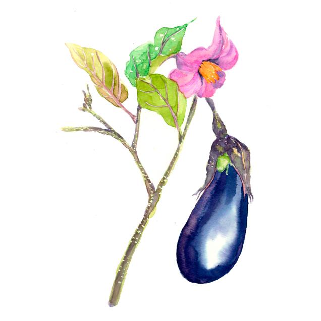 秋ナス,農家,野菜の花,高塚由子_Yoshiko,Taaktsuka,水彩画,イラスト,食べ物