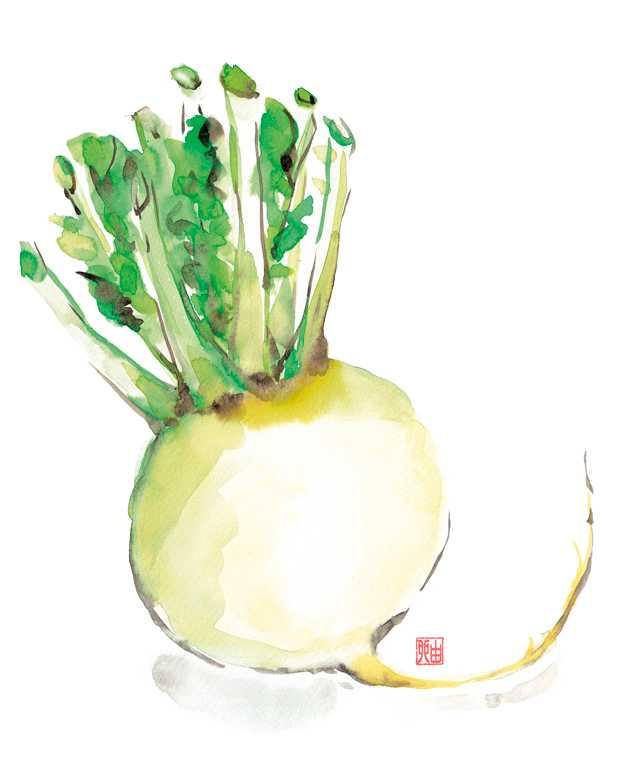 辛味大根,京野菜,水彩画,イラスト,素材,食材