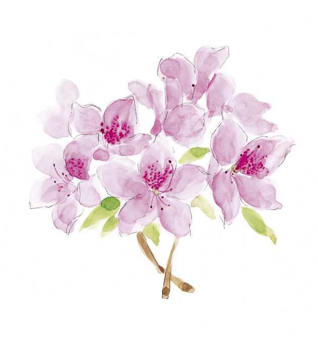 ツツジ,花,春,植物,水彩画,イラスト