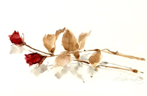 ドライフラワー,バラ,花,高塚由子_Yoshiko,Taaktsuka,水彩画,イラスト