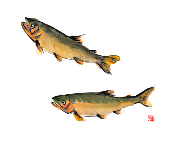 あゆ,放流,川釣り,川魚,水彩画,イラスト,素材,食材