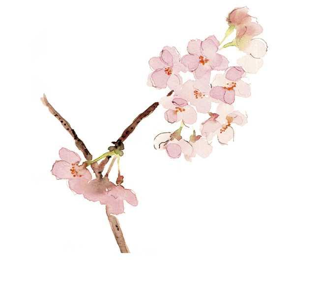 桜, 桜前線, 開花宣言,高塚由子,Yoshiko,Taaktsuka,水彩画,Watercolor,イラスト,素材