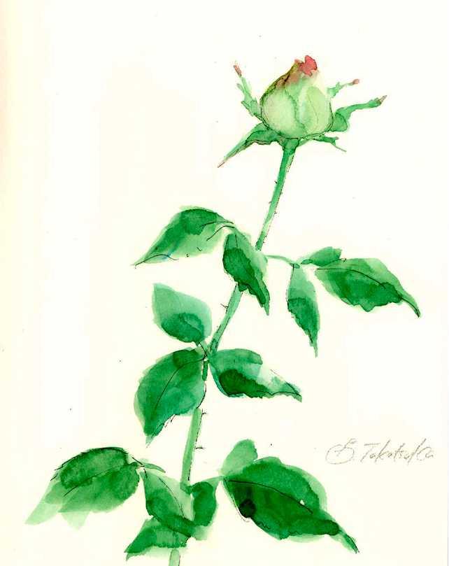 バラ,ローズ,水彩,イラスト,花,植物