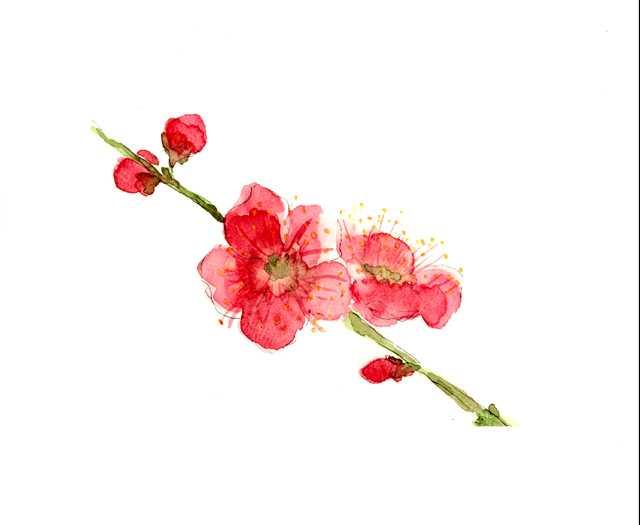 紅梅,水彩画,イラスト,花,植物,素材