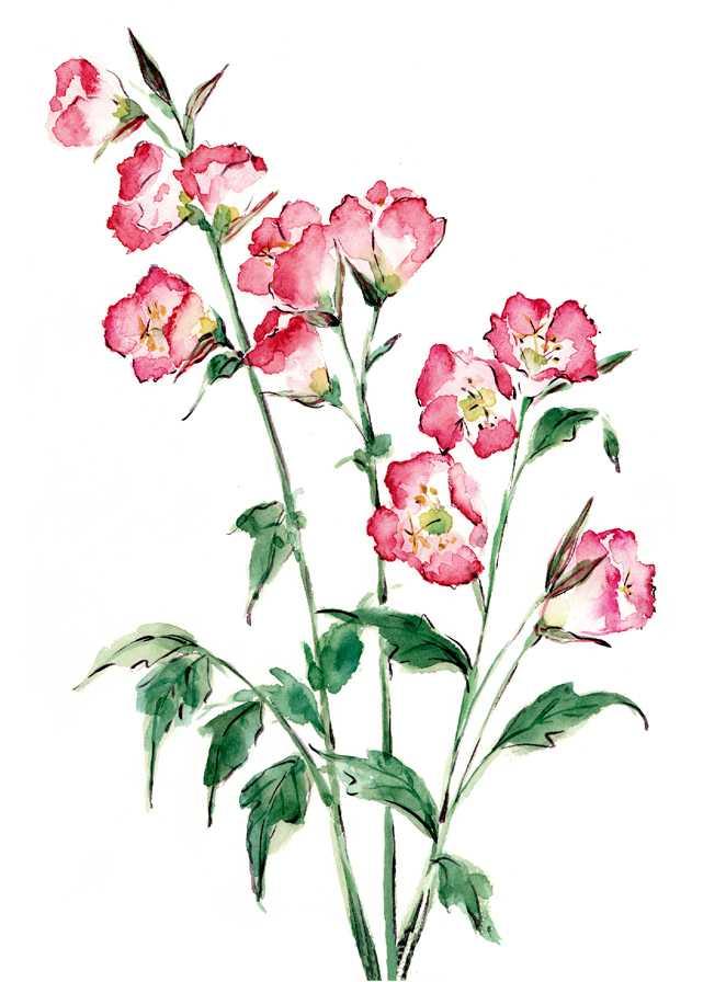 雑草,花,水彩画,イラスト