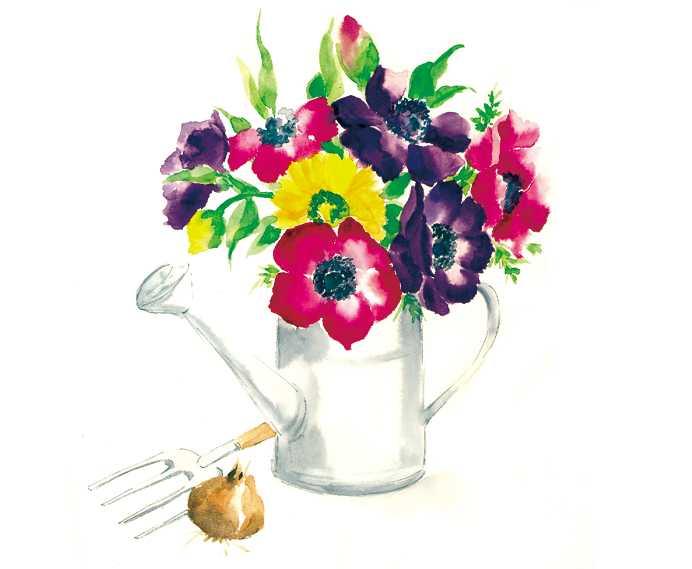 アネモネ,水彩画,イラスト,花,植物,素材