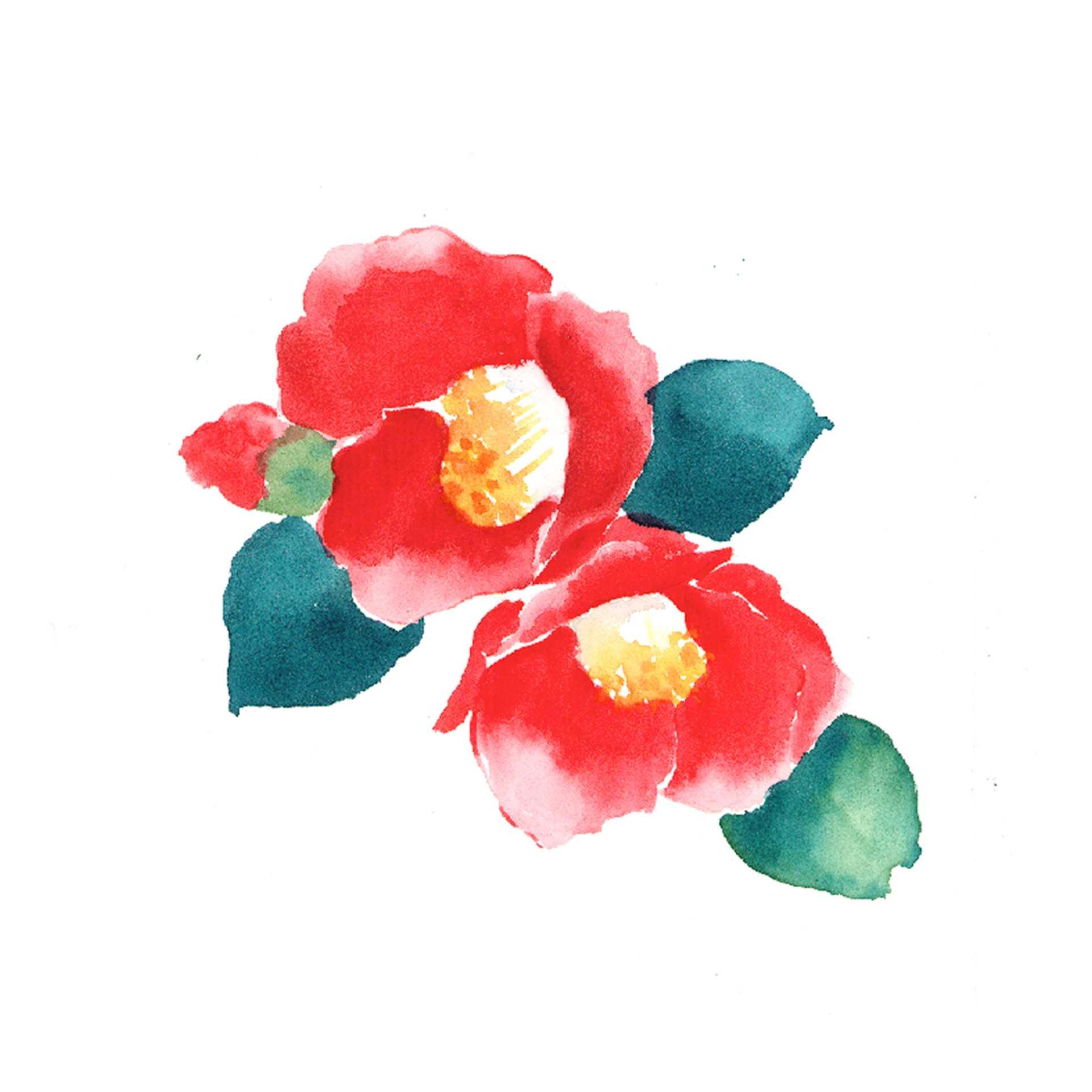 椿,つばき,水彩画,イラスト,花,植物,素材