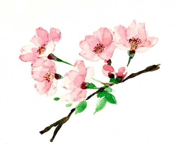 桜,開花宣言,春,水彩画,イラスト
