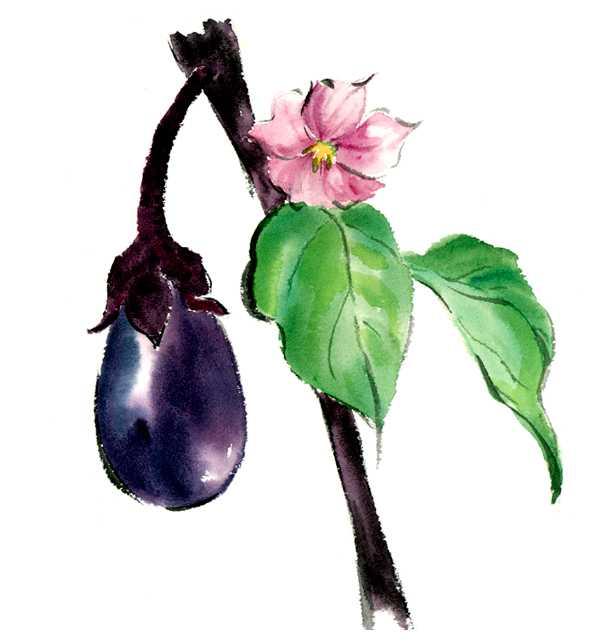 仕事絵,ナス,野菜の花,水彩画,イラスト,素材,食材