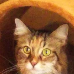 気まぐれな猫 ムラゴンブログ