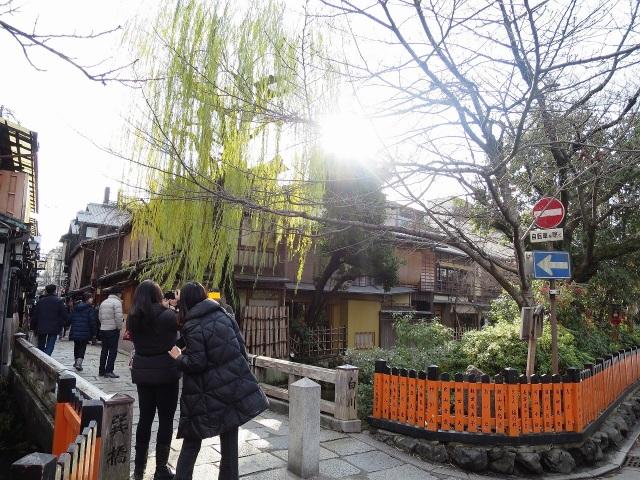 祇園・巽橋の柳