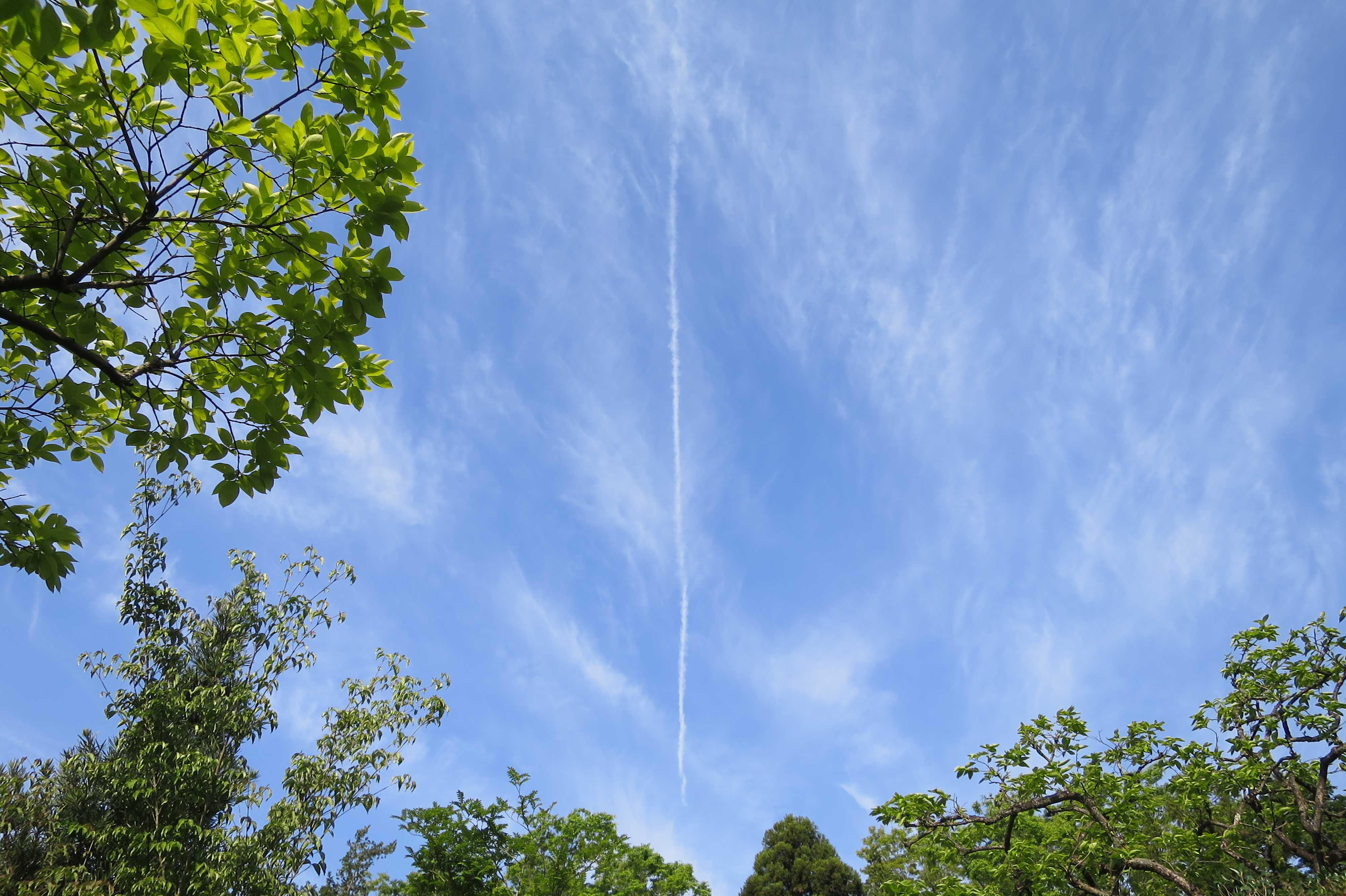 禅寺丸の原木上空の飛行機雲