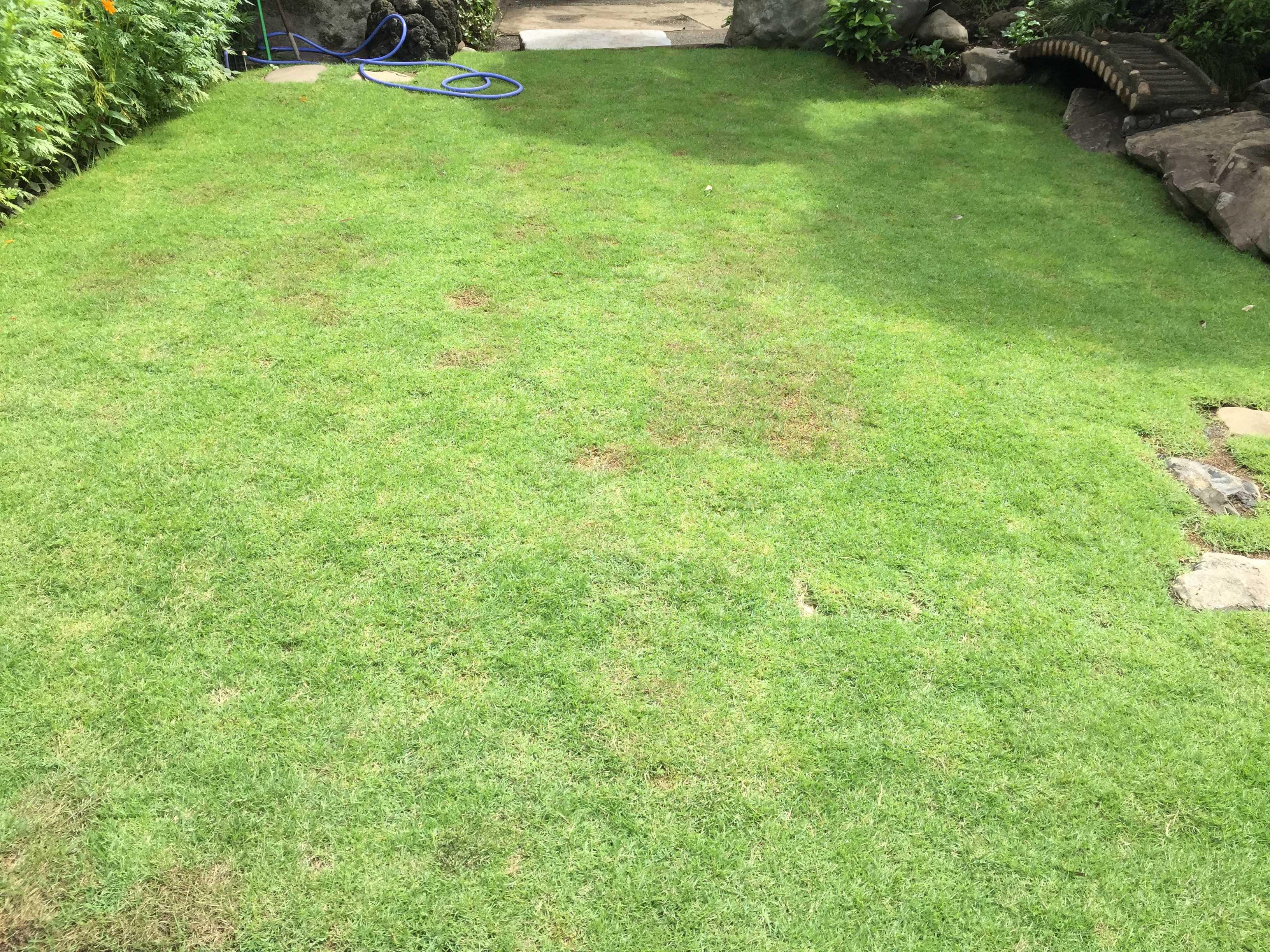 夏の日の光 - 芝生