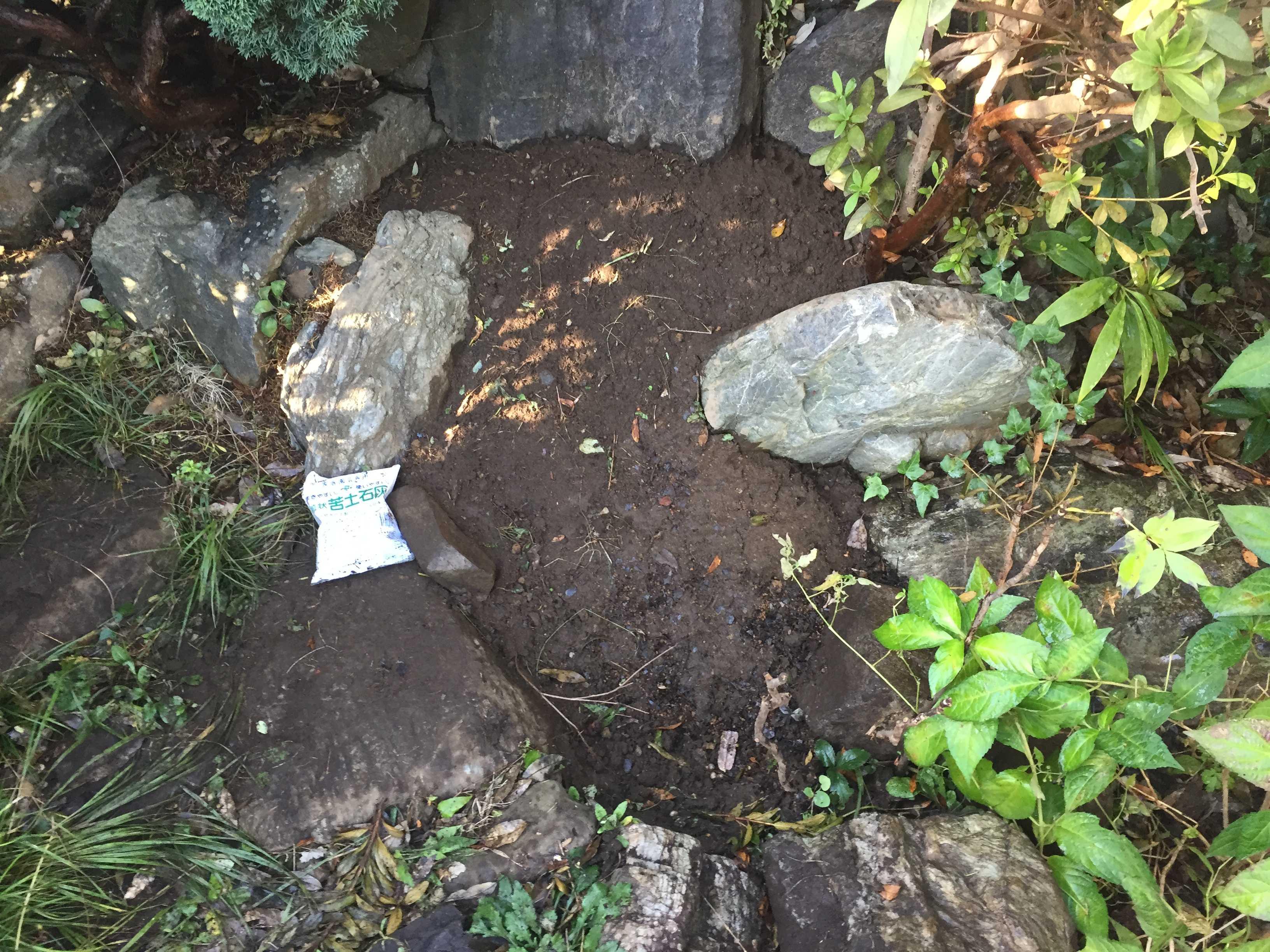 ヤマユリの球根植え付け - 石陰
