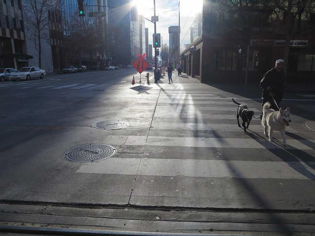 サンノゼ - 散歩する犬