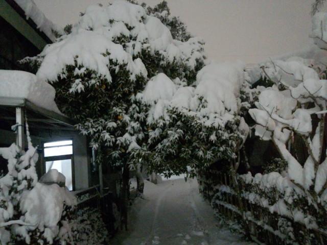 大雪と街路樹