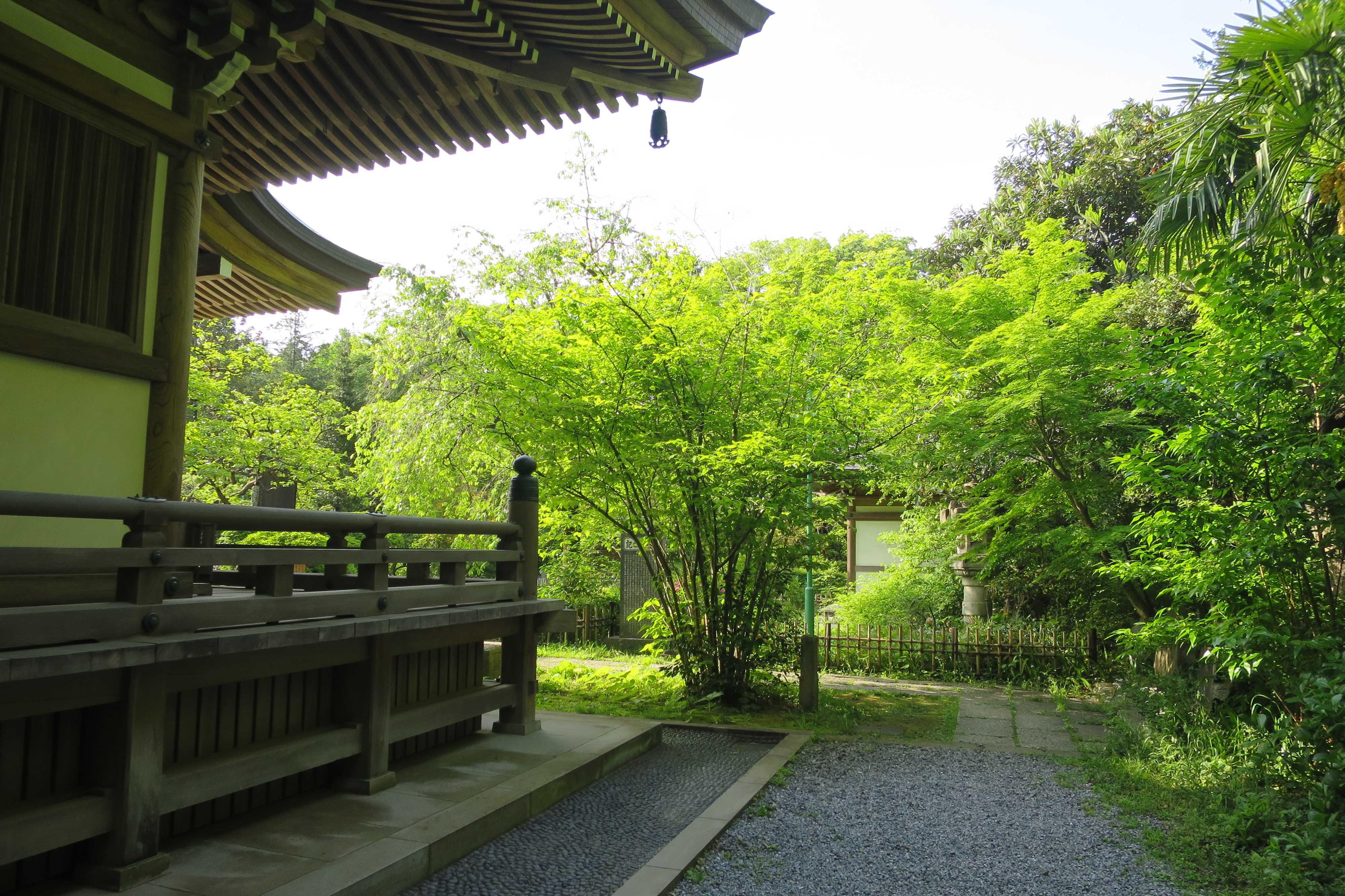 王禅寺境内の目に眩しい新緑