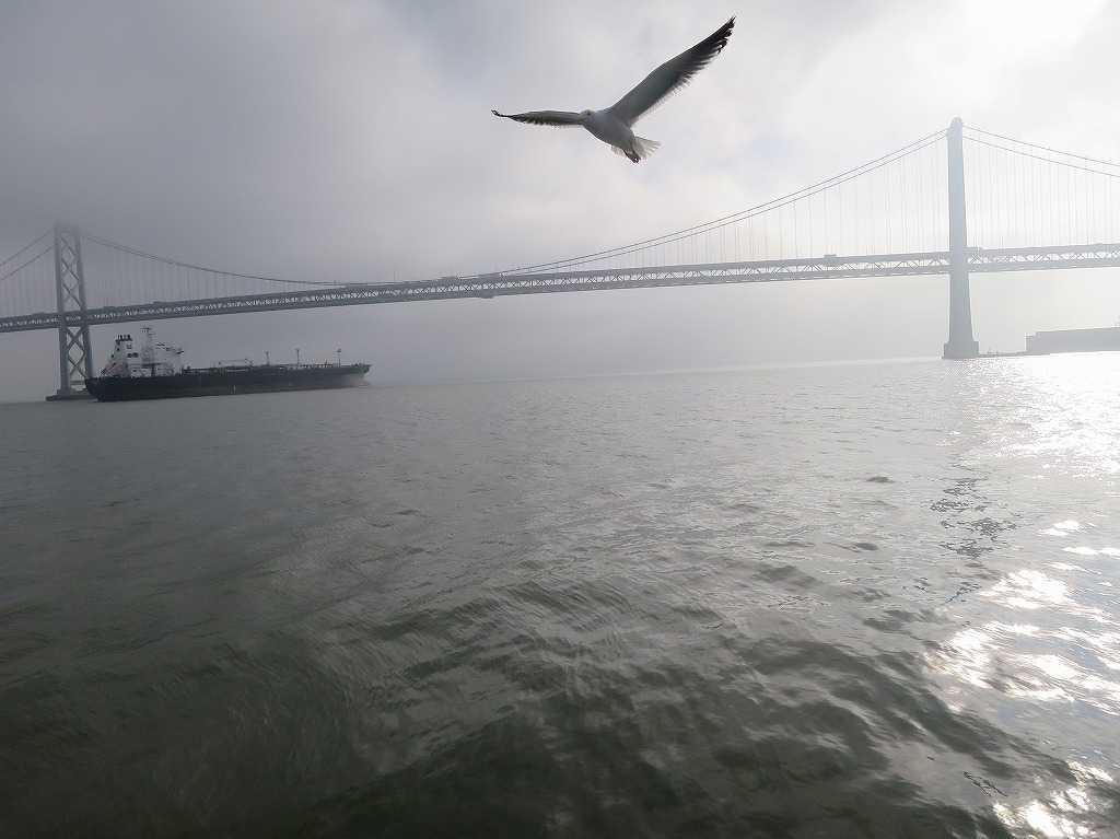 カモメ飛ぶサンフランシスコ湾
