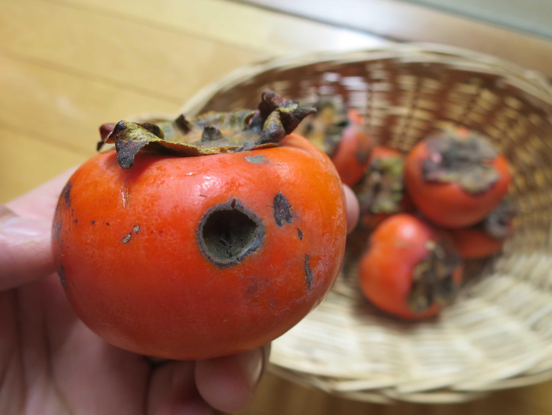 黒く穴のあいた柿