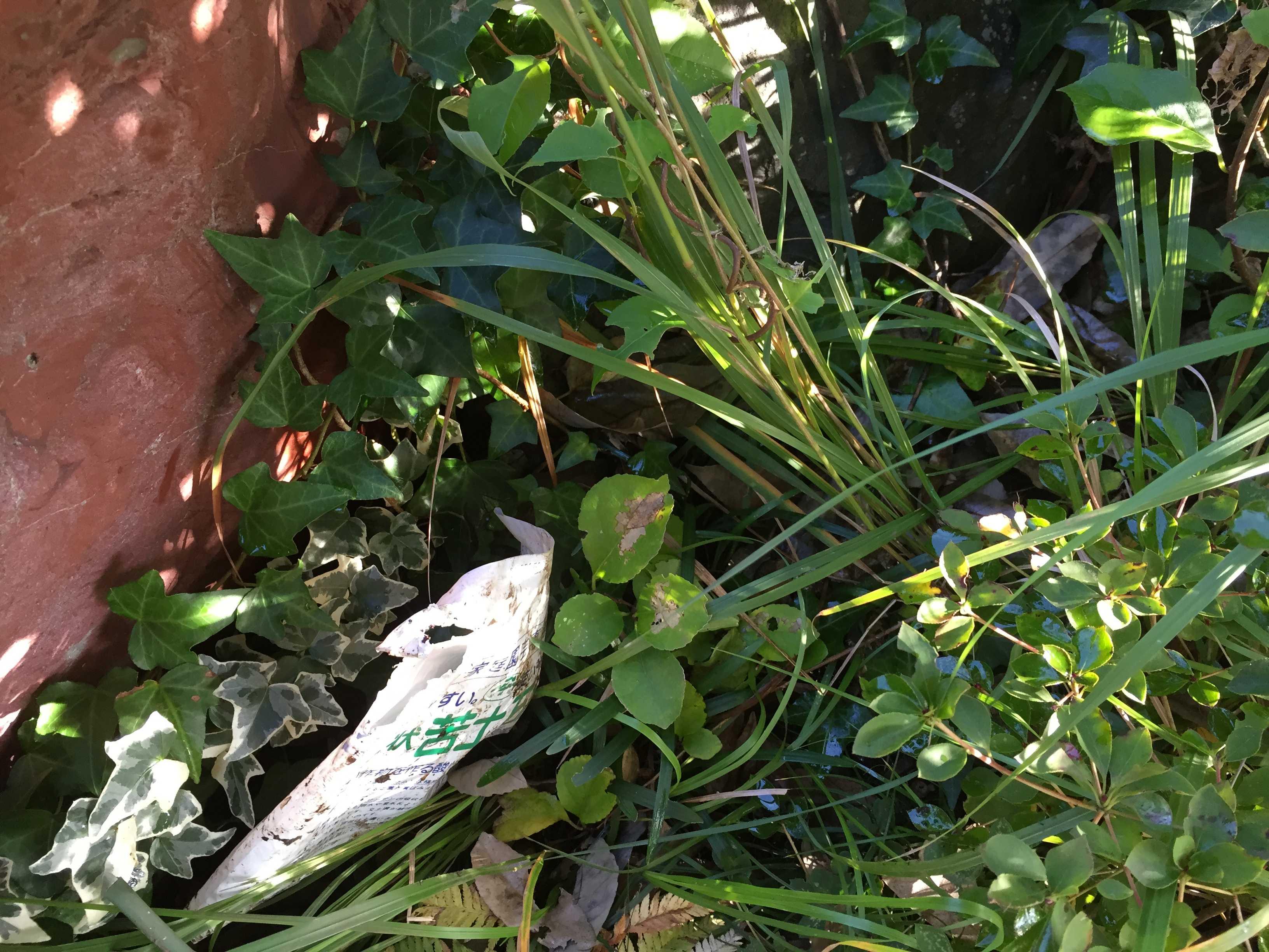 庭木の根元の茂み - やまゆりの球根の植え付け
