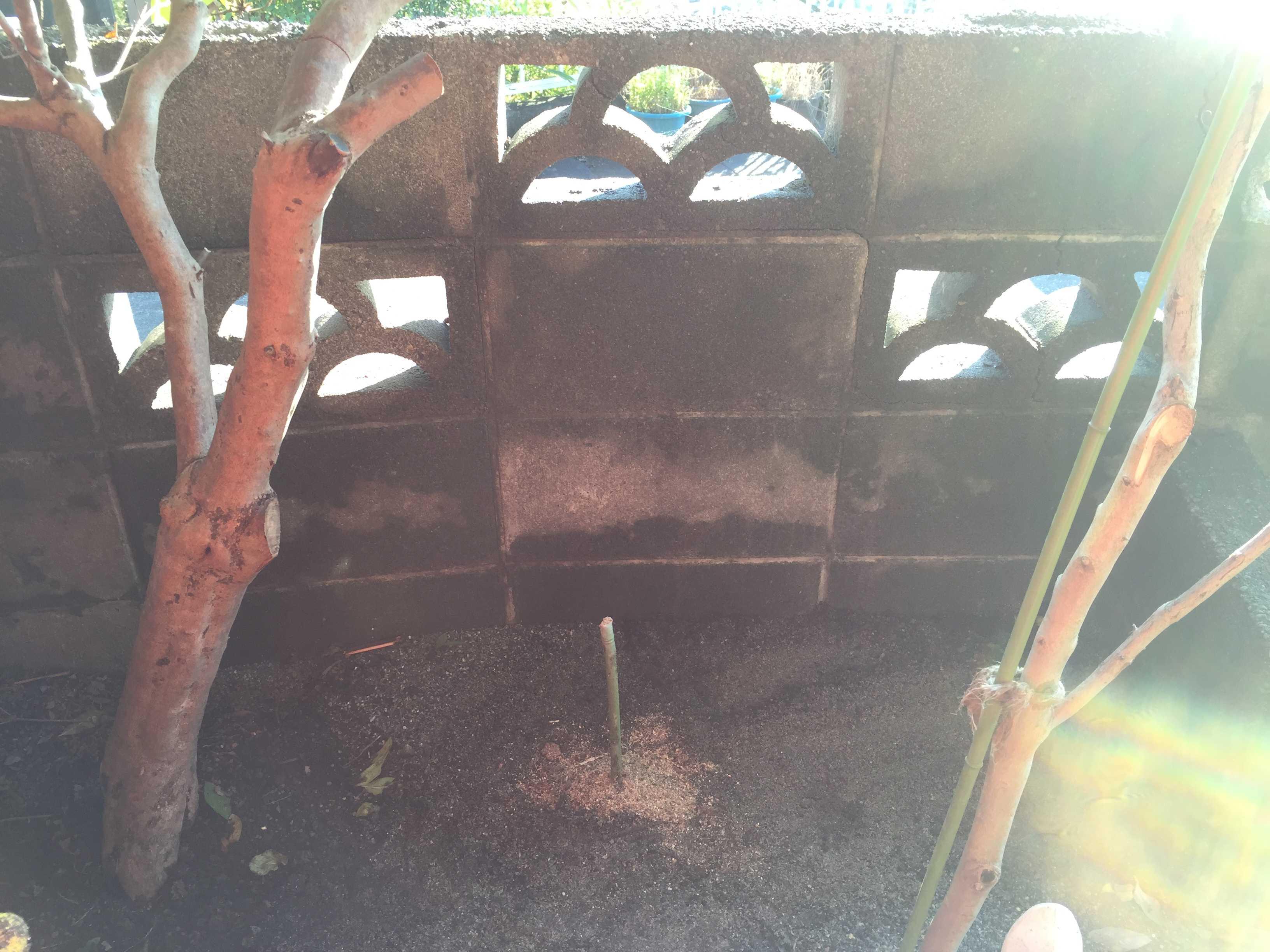 ブロック塀が西日を遮光する場所 - やまゆりの球根の植え付け