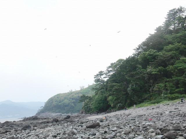 真鶴岬の海岸