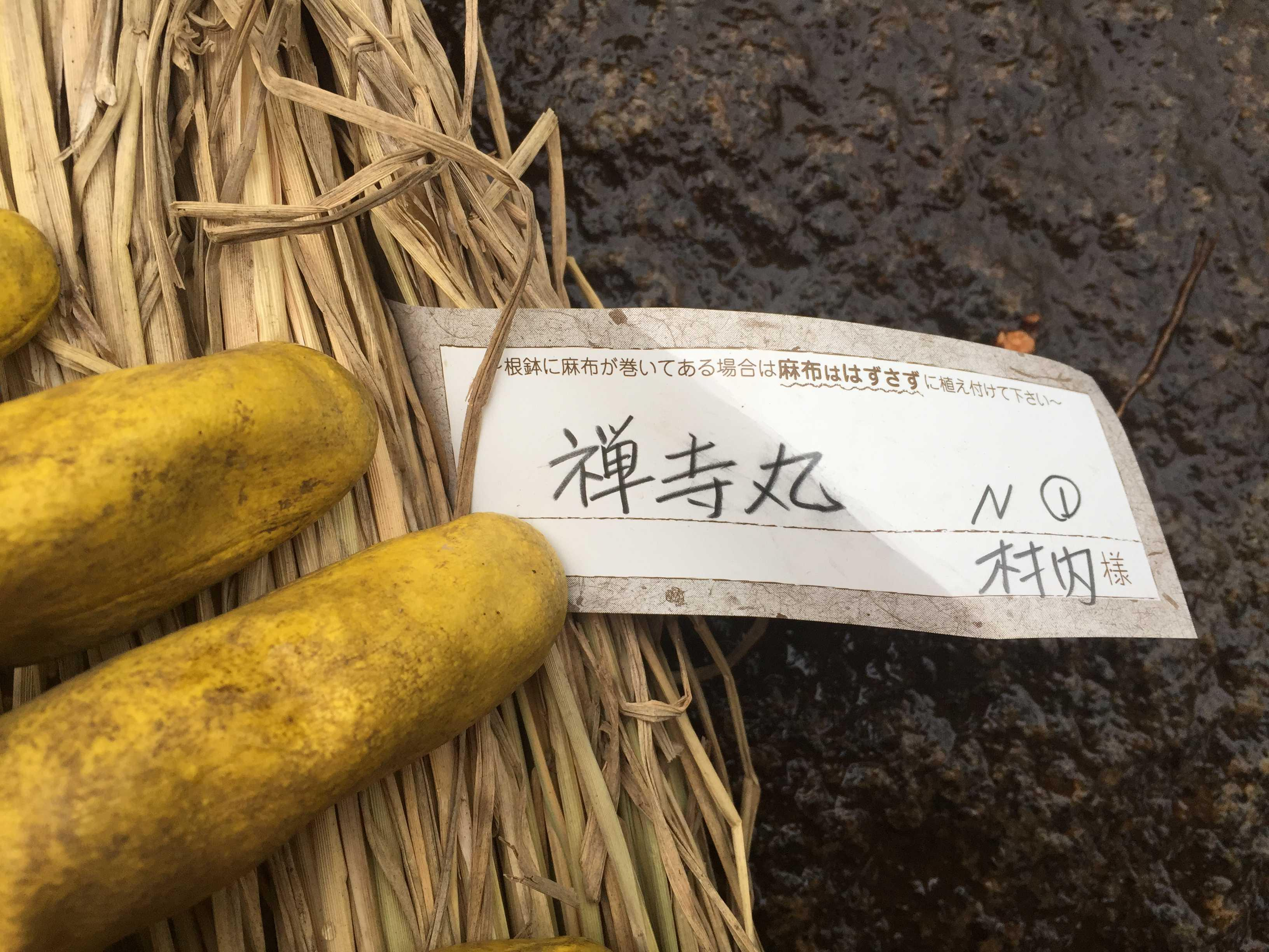 禅寺丸柿(ぜんじまる/ゼンジマル)
