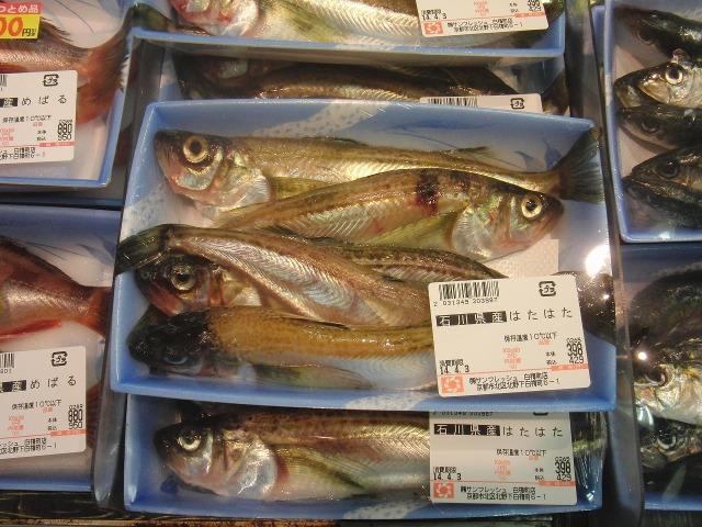 石川県産はたはた(魚)