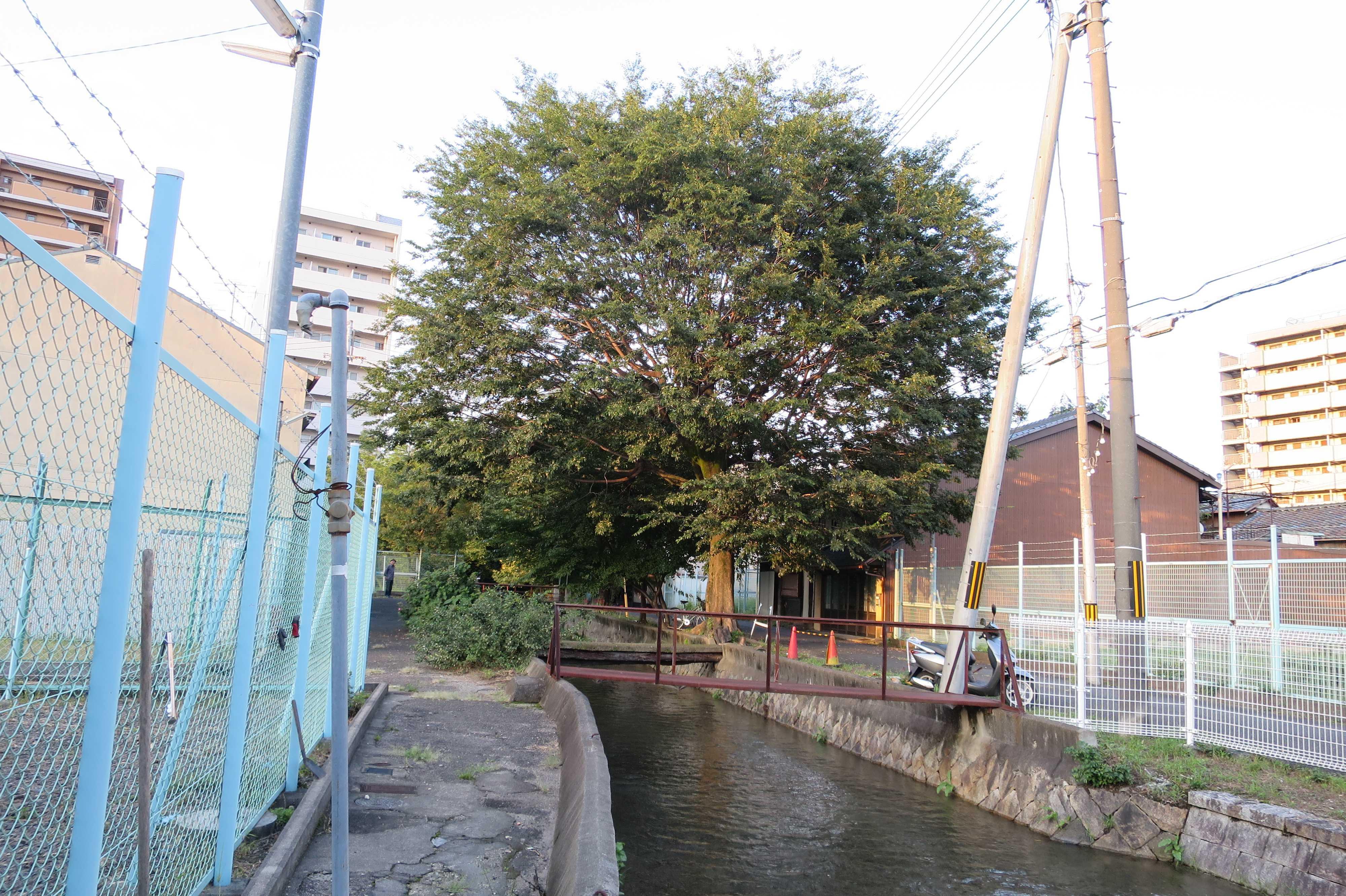 京都・崇仁地区内を静かに流れる高瀬川