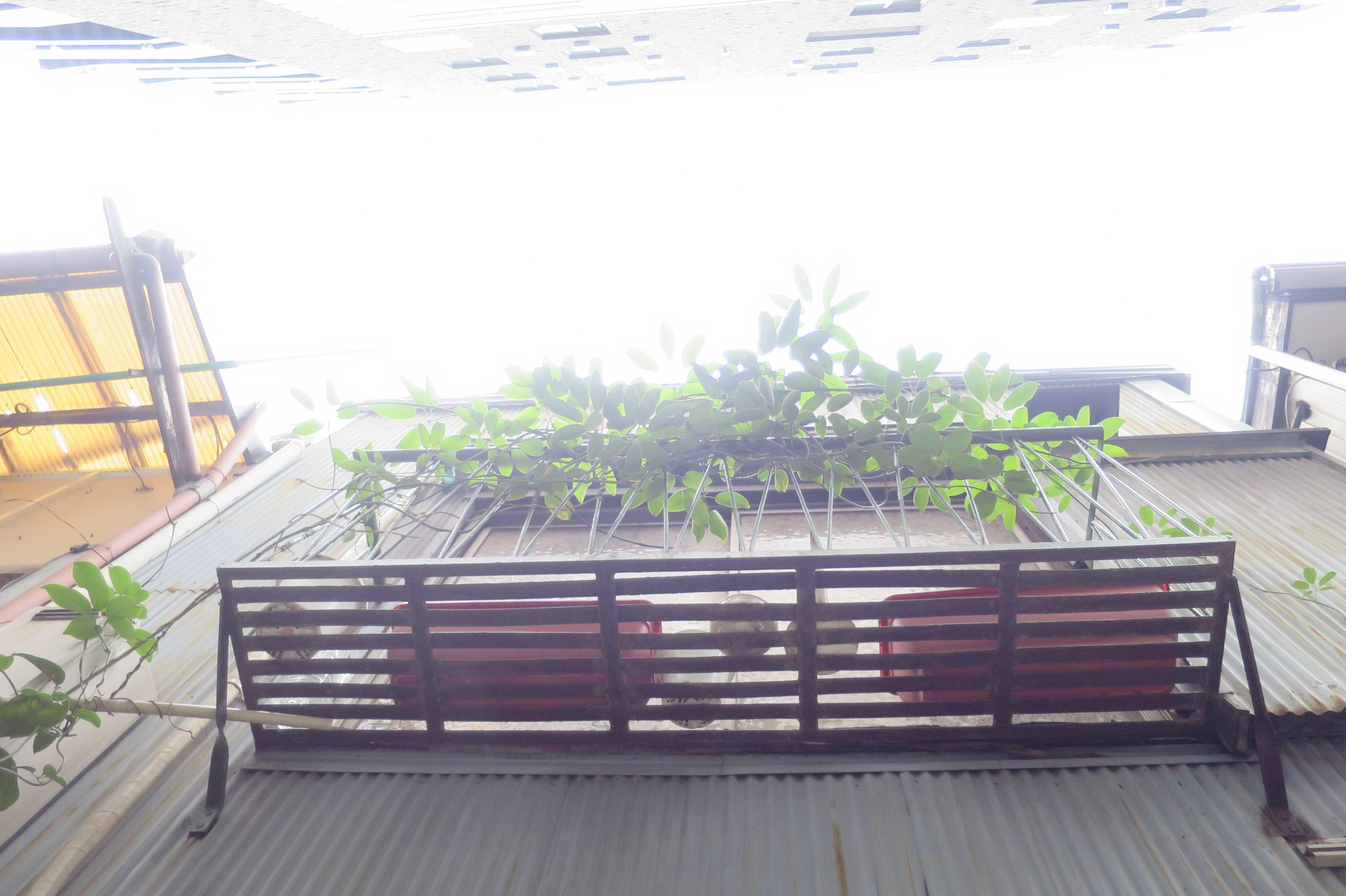 築地エリア - 波板トタンの外壁から飛び出ている植木棚