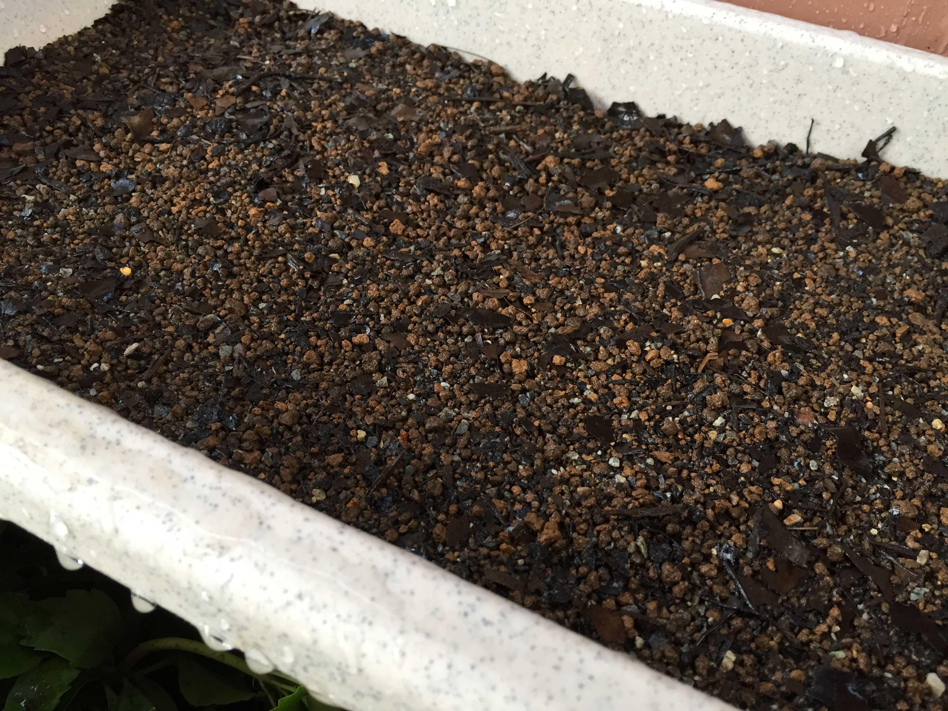 ヤマユリの種子繁殖/実生 - 水まき
