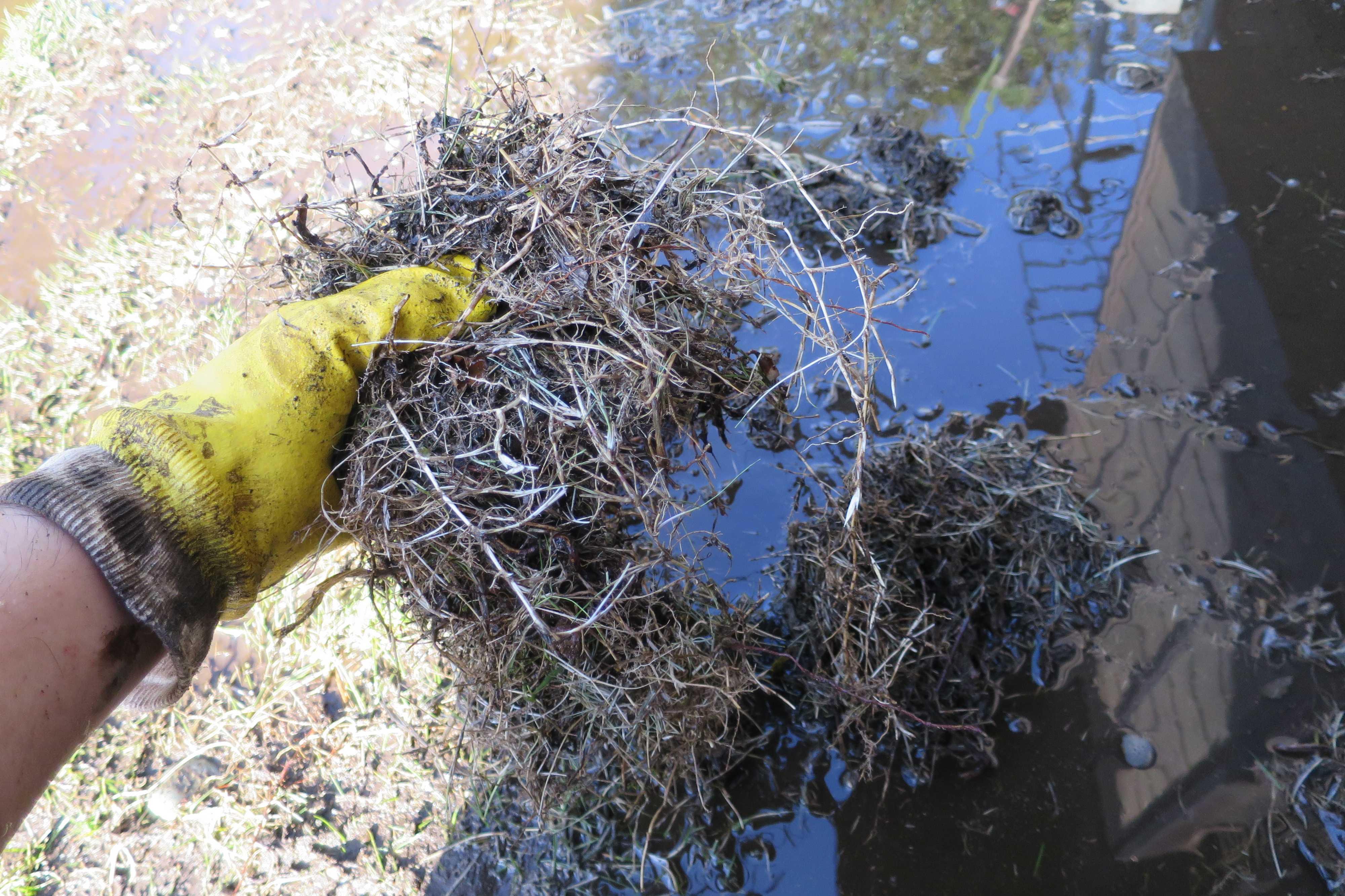 水洗いして捨てる前の芝