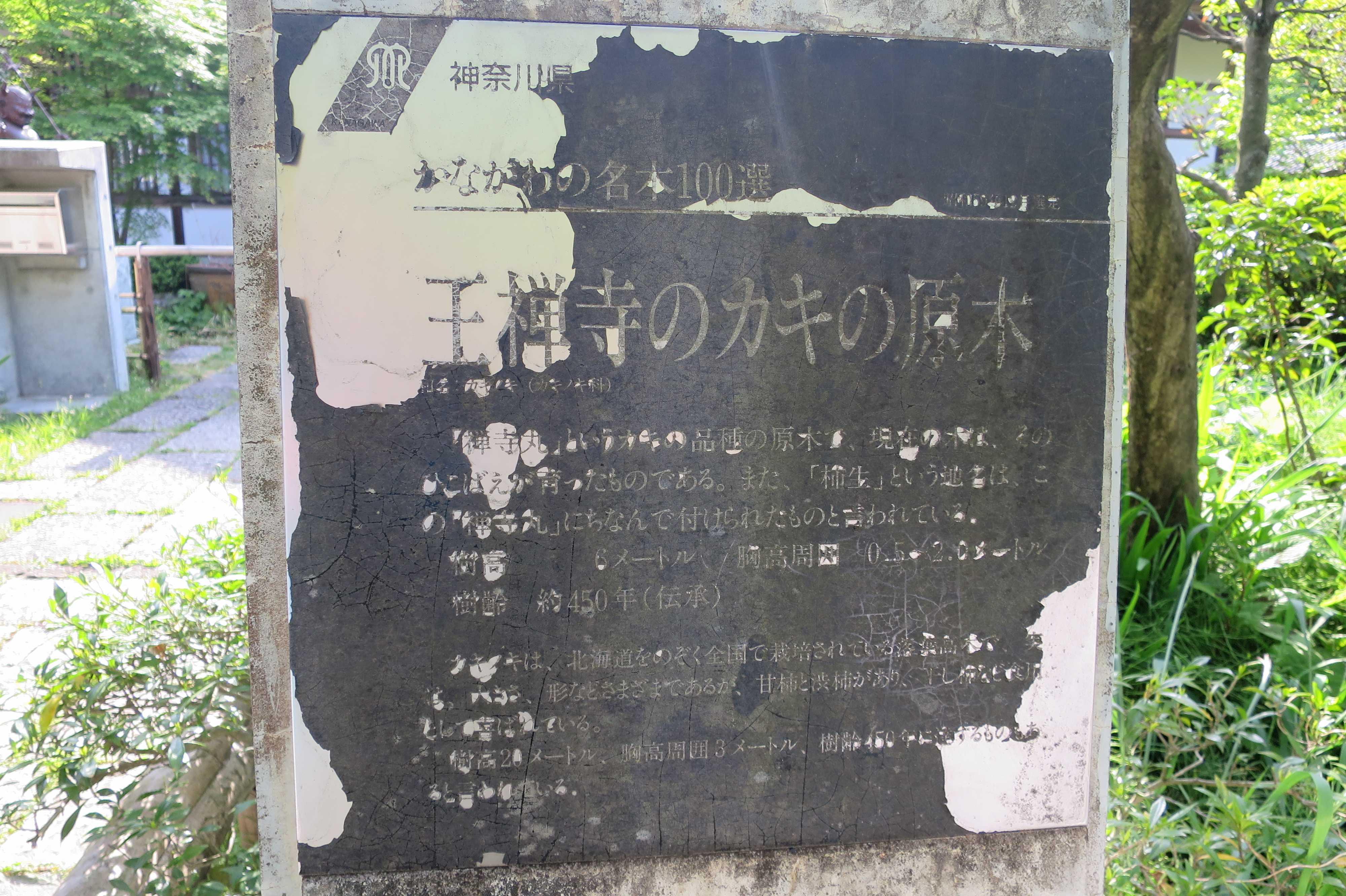 王禅寺のカキの原木 - 神奈川県 かながわの名木100選 昭和59年12月選定