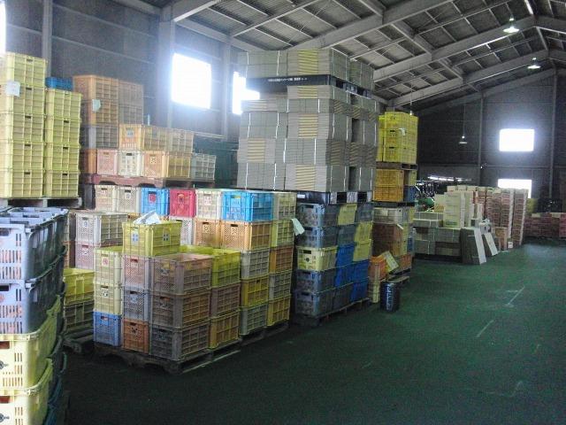 向島の柑橘類市場