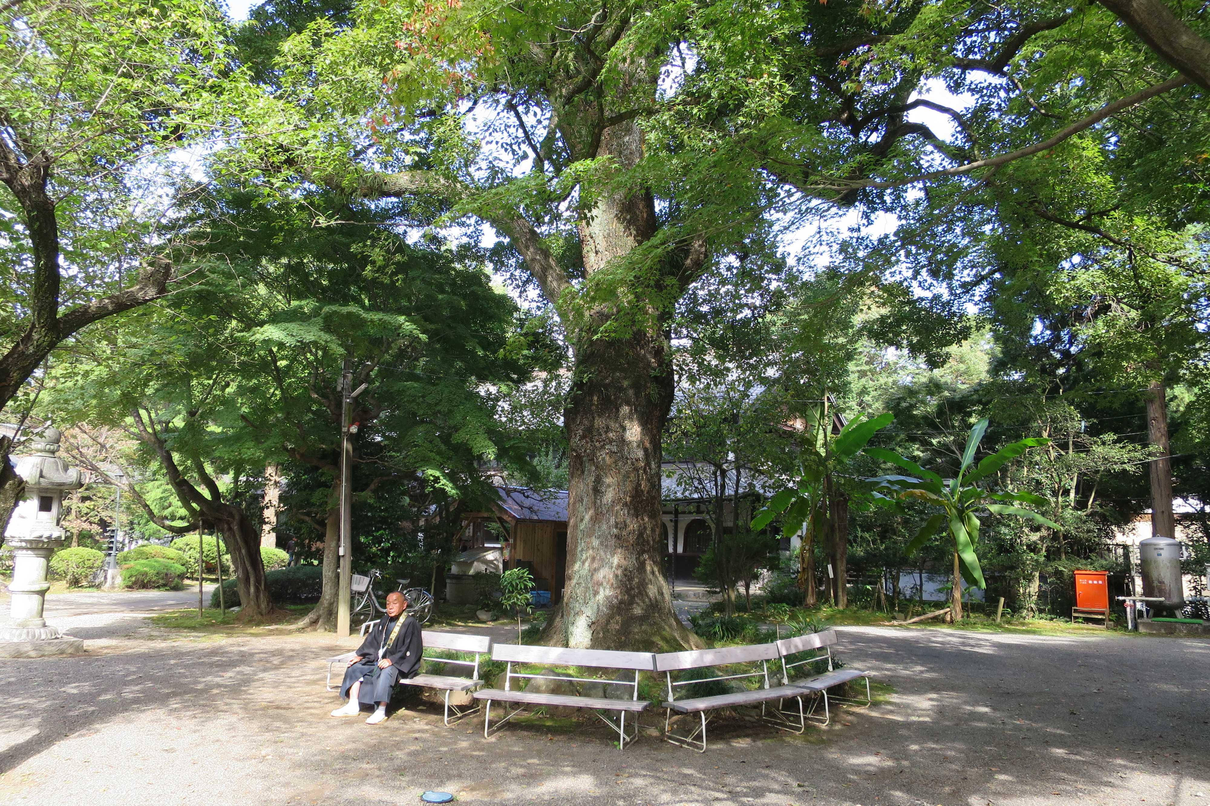 無量光寺 - 大樹の根元のベンチで一休みする信徒の方