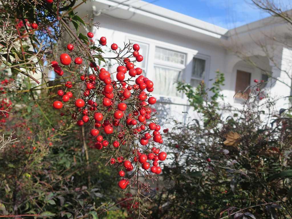 サンノゼ - 赤い実と白い壁