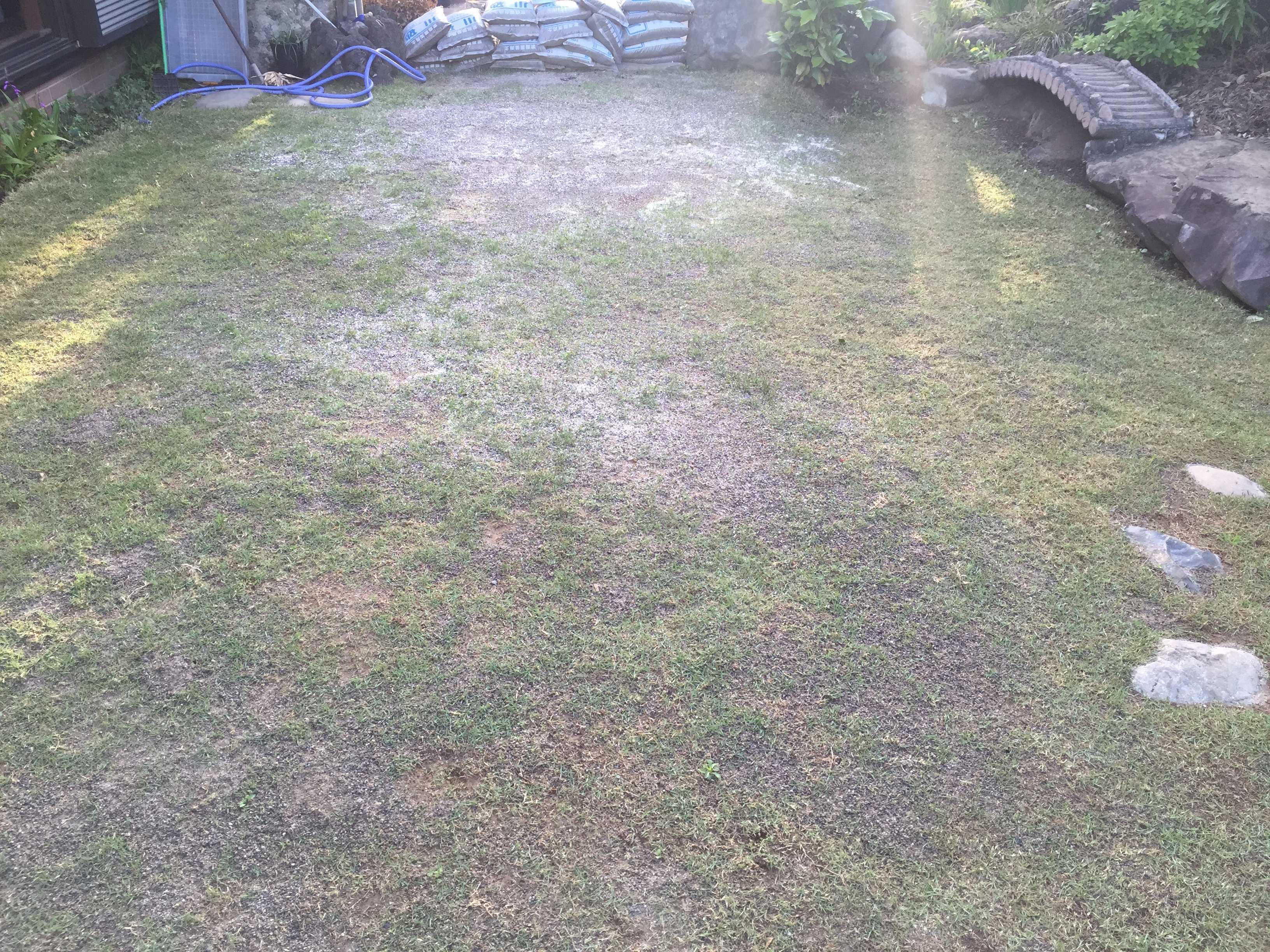 植え付け 11ヶ月。緑がかってきた TM9(ティーエムナイン)