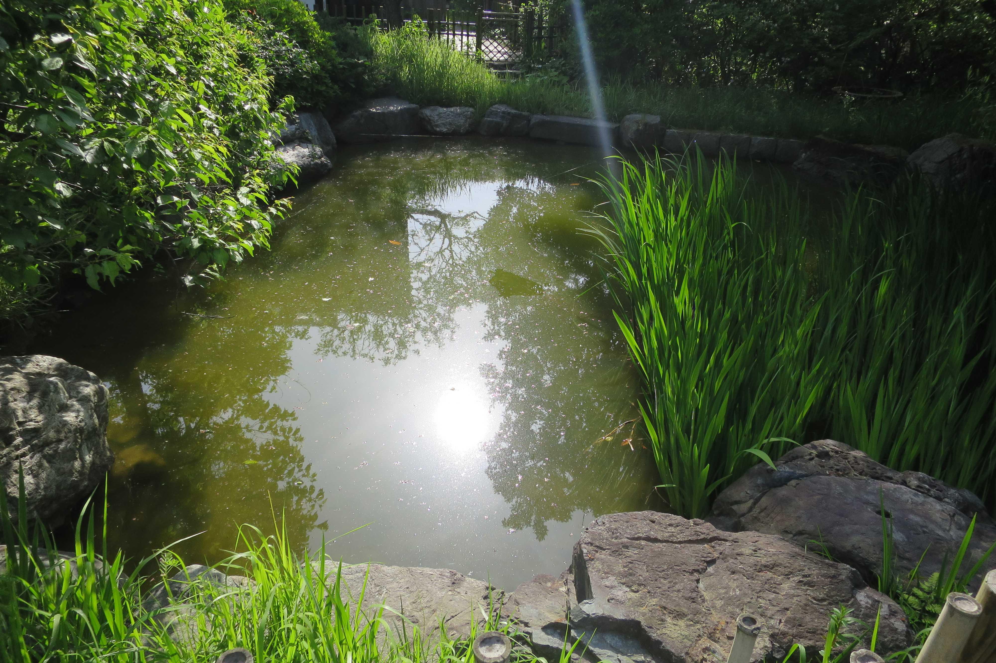 王禅寺 本堂参道横の池